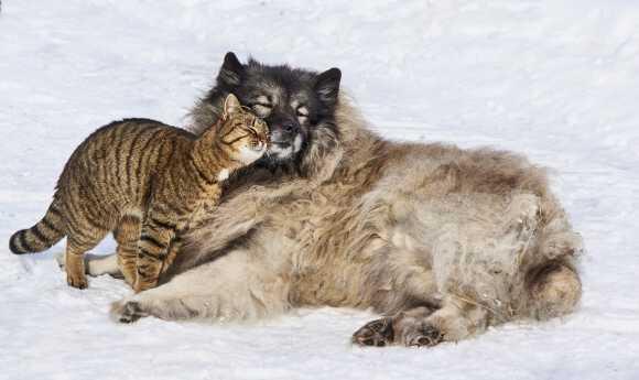 дружба и поддержка